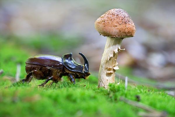 Pilz & Käfer